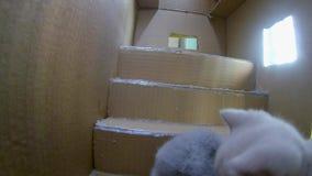 Maison de carton de chats clips vidéos