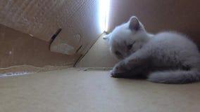 Maison de carton de chats, vue d'intérieur de gopro clips vidéos