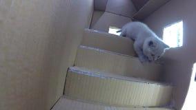 Maison de carton de chats, vue d'intérieur de gopro banque de vidéos