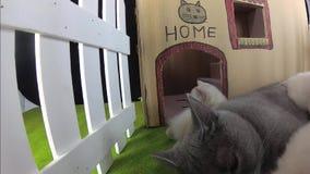 Maison de carton de chats, vue extérieure clips vidéos