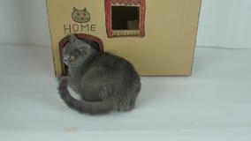Maison de carton de chats, vue extérieure banque de vidéos
