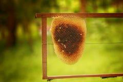 Maison de cerana d'api d'abeilles