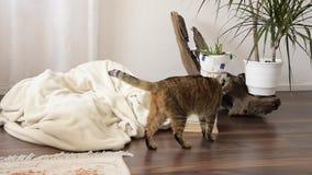 Maison de marche de chat domestique L'espace vivant int?rieur contemporain clips vidéos