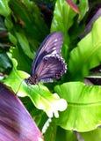 Maison de papillon Image stock