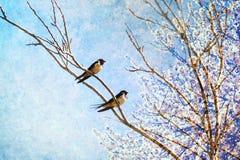 Maison de retour d'oiseaux d'hirondelles le printemps Nature de ressort réveillant le concept Photographie stock libre de droits