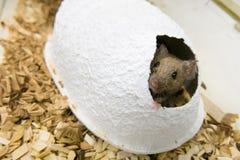 Maison de souris et de papier Photographie stock