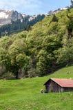 Maison de village dans les montagnes Pâturage des vaches photo stock