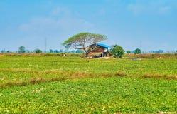 Maison de village sous l'arbre, région de Bago, Myanmar Photographie stock