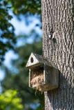 Maison en béton d'oiseau Photos stock