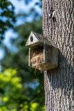 Maison en béton d'oiseau Images stock