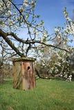 Maison en bois d'oiseau photographie stock