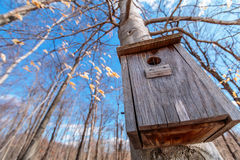 Maison en bois d'oiseau Images stock