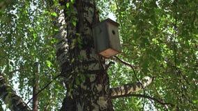 Maison en bois d'oiseau sur le haut bouleau banque de vidéos