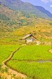 Maison en bois dans des collectes de riz photographie stock