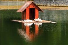 Maison en bois pour des cygnes sur un lac en parc de ville photographie stock libre de droits
