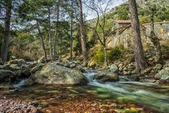 Maison Forestiere pelo rio de Tartagine em Córsega Imagem de Stock Royalty Free