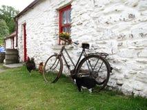 Maison irlandaise blanche avec les poulets et le vélo de chat image stock