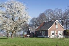 Maison minuscule de campagne à l'arbre de floraison Photo stock