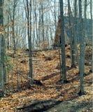 Maison sur un flanc de coteau boisé. Images stock