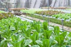 Maison végétale Photo libre de droits