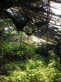 Maison verte réunie par annonce Images stock