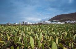 Maisons blanches avec le cactus Photo libre de droits