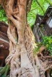 Maisons chinoises d'amont très vieil d'arbre dans Liujiang Photos libres de droits