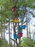 Maisons colorées par oiseaux sur l'arbre Photo stock