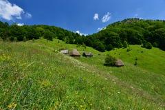 Maisons en bois avec les toits couverts de chaume près de la forêt Photographie stock libre de droits