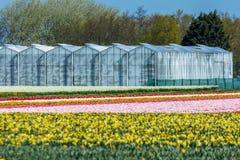 Maisons vertes dans un domaine de fleur cultivé Photos stock