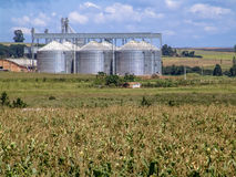 Maisplantage mit Silo im Hintergrund stockfotos