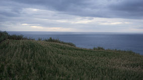 Maisplantage und -meer gestalten im Sao Miguel, Azore landschaftlich stockfotos