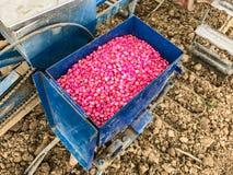 Maissamen chemisch behandelt lizenzfreie stockfotografie