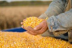 Maissamen in der Hand des Landwirts Lizenzfreie Stockfotos