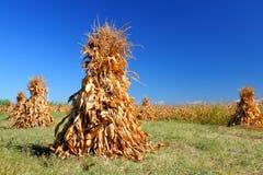 Maisstapel zum zu trocknen stockfoto