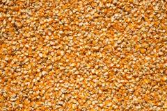 Maisstartwert für zufallsgenerator Lizenzfreies Stockfoto