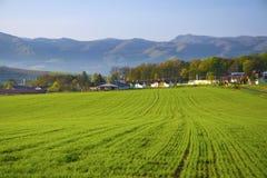 Maisweidelandschaft mit Bergen im Hintergrund Lizenzfreie Stockbilder