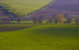 Maisweidelandschaft mit Bergen im Hintergrund Stockfoto