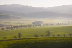 Maisweidelandschaft mit Bergen im Hintergrund Stockfotos