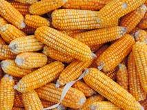 Maiszufuhr des Tieres Stockfoto