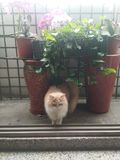 Maita in the little garden royalty free stock image