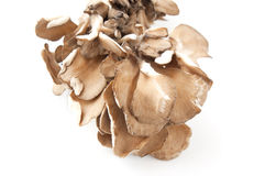 Maitake mushrooms Royalty Free Stock Image