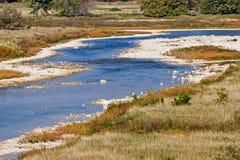 Maitland Fluss Lizenzfreie Stockfotos