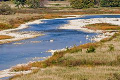 maitland rzeka Zdjęcia Royalty Free