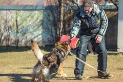 Maitre-chien de chien et berger allemand qualifiés pour se protéger Gomel, Belar Photo libre de droits