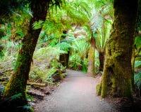 Maits休息在大洋路,澳大利亚的雨林足迹 免版税图库摄影
