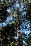Maits休息雨林步行,伟大的奥特韦国立公园,维多利亚,澳大利亚 图库摄影