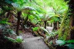 Maits odpoczynku tropikalnego lasu deszczowego ślad na Wielkiej ocean drodze, Australia Obrazy Stock