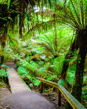 Maits odpoczynku tropikalnego lasu deszczowego ślad na Wielkiej ocean drodze, Australia Zdjęcia Royalty Free