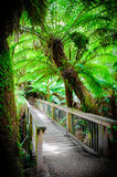 Maits Rest Rainforest Trail on Great Ocean Road, Australia Stock Images